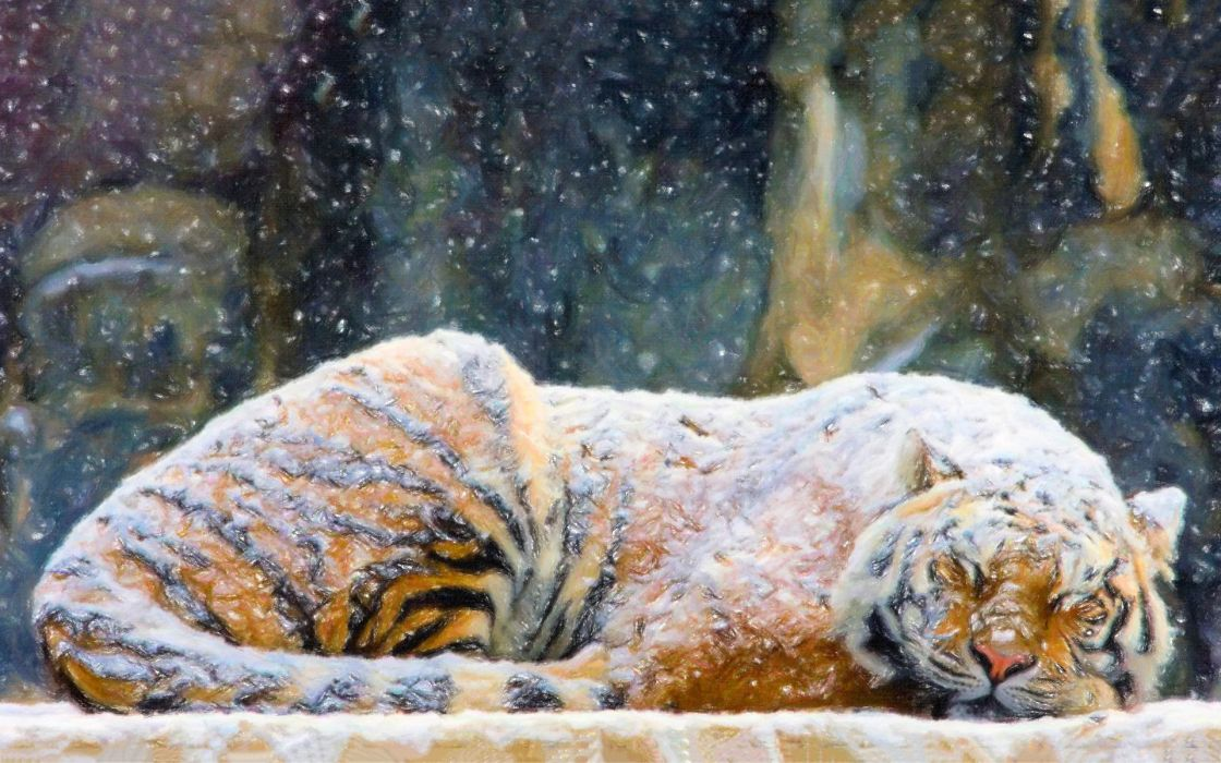 art paintings tiger winter snow flakes wallpaper