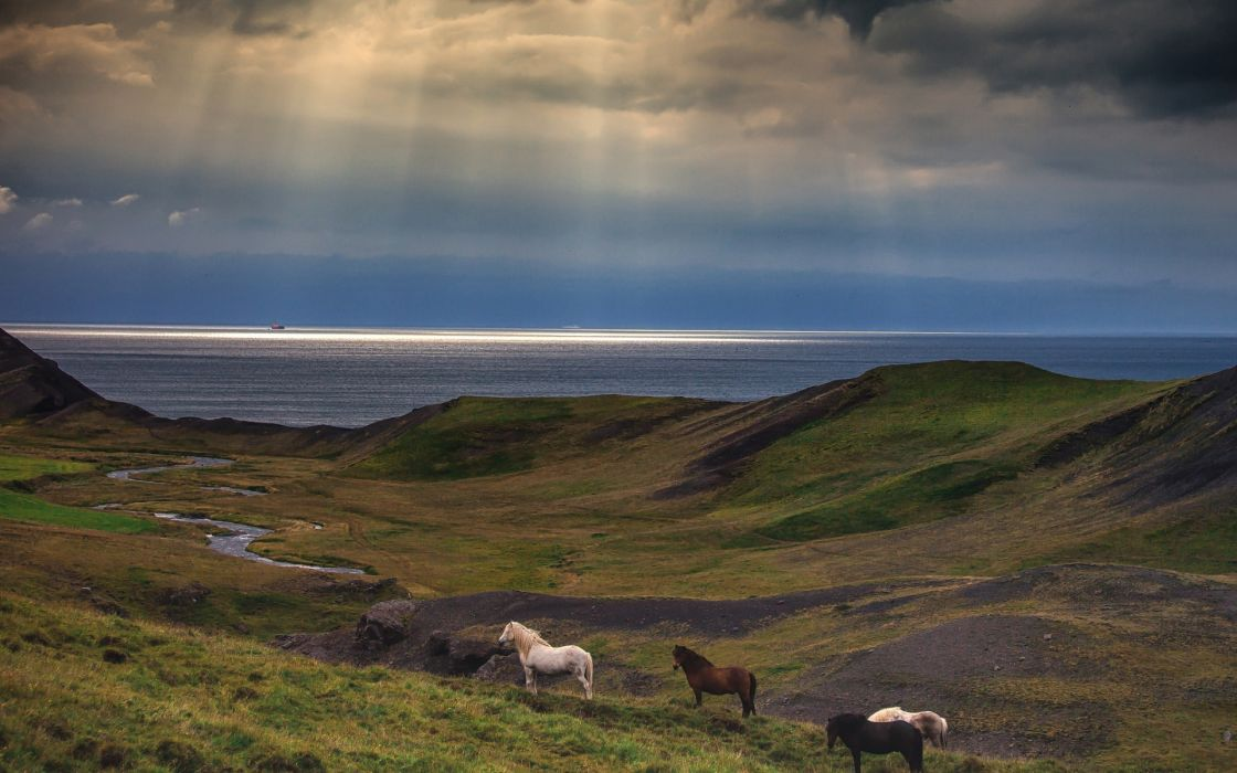 horses nature landscapes sky clouds sunlight beams rays wallpaper