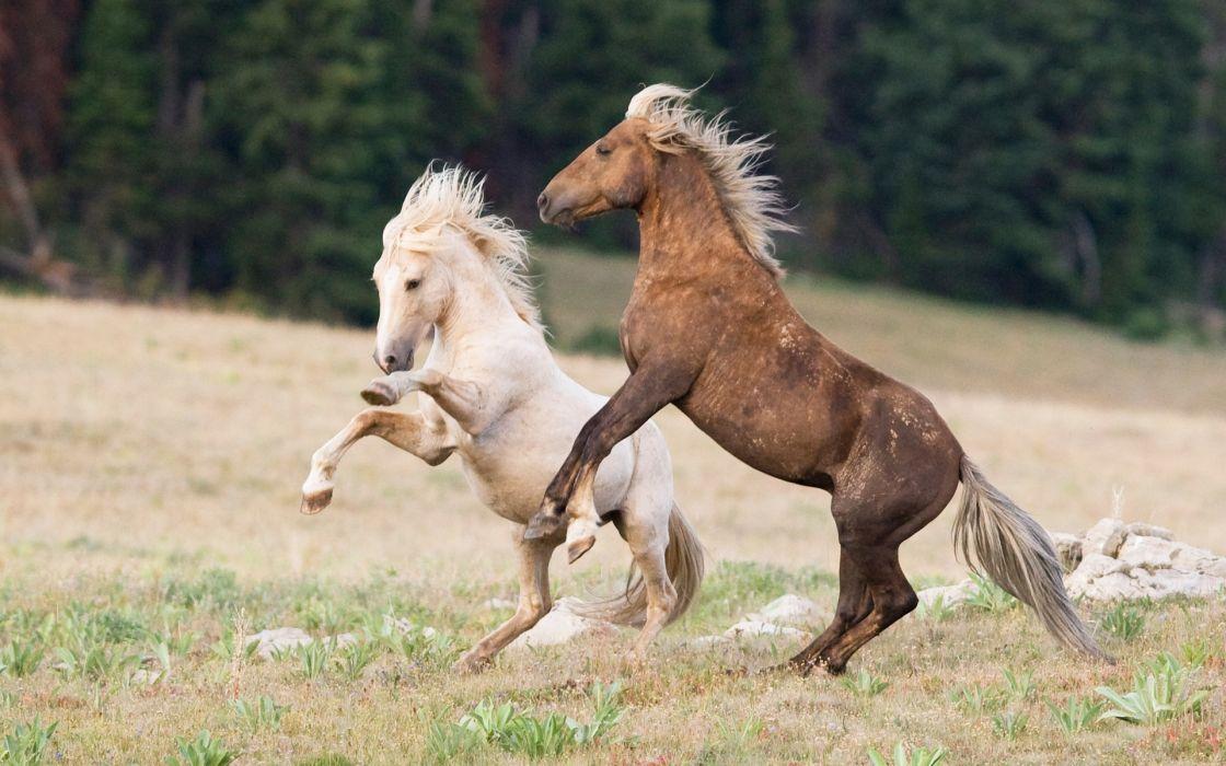 horses landscapes nature wallpaper