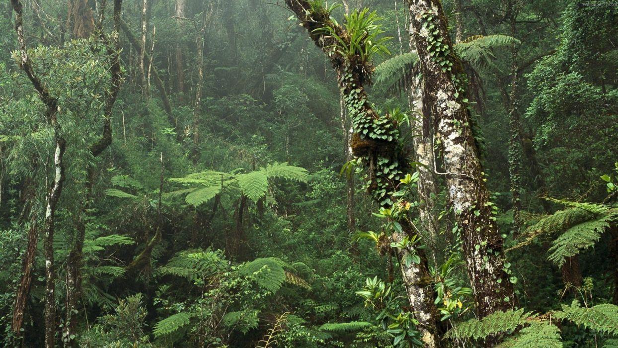 landscapes forest woods jungle storm rain fern wallpaper