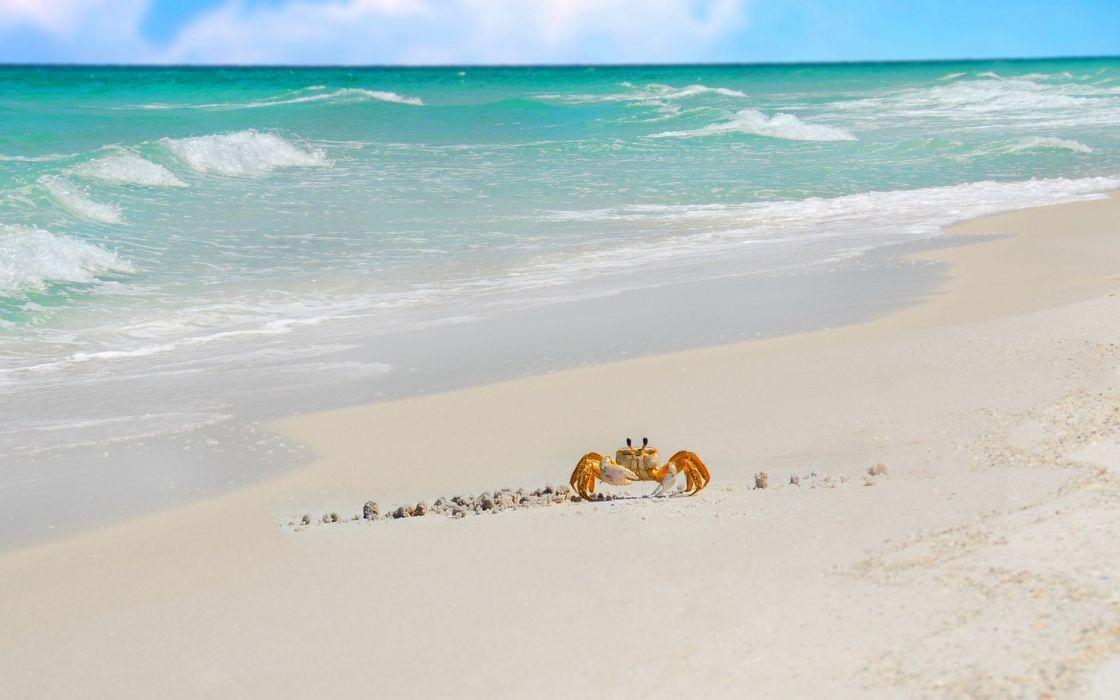 crabs nature beaches ocean sea waves sand tropical wallpaper