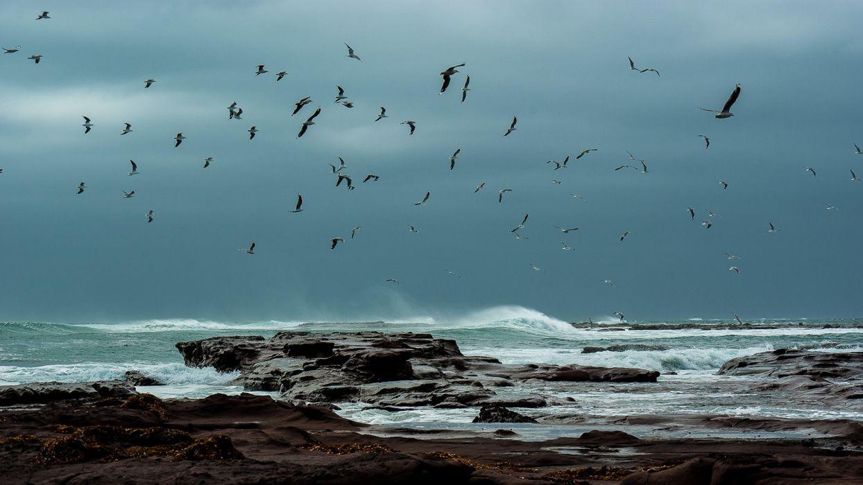 gulls nature flight fly ocean sea waves beaches storm wallpaper