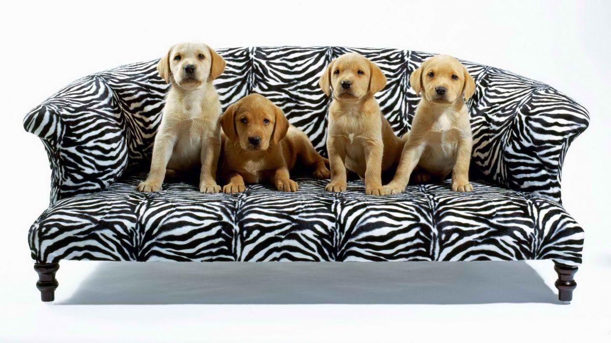 puppy cute puppies wallpaper