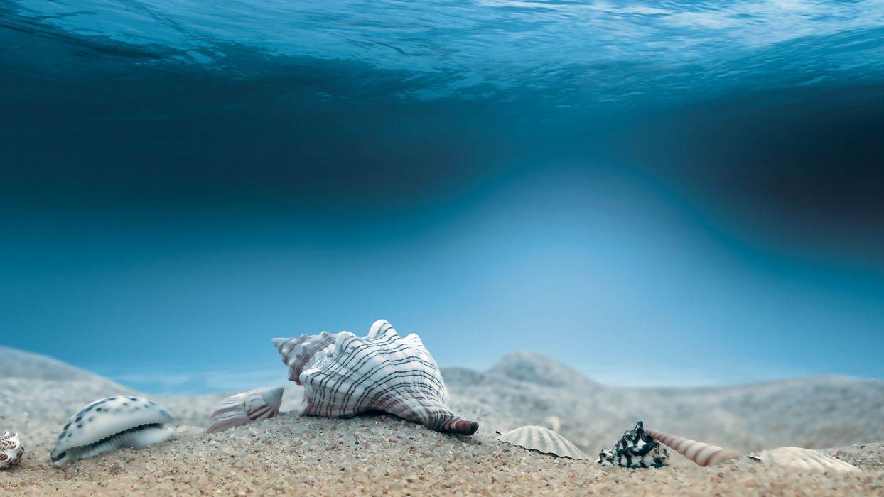 cg digital art ocean sea water underwater shells sand wallpaper