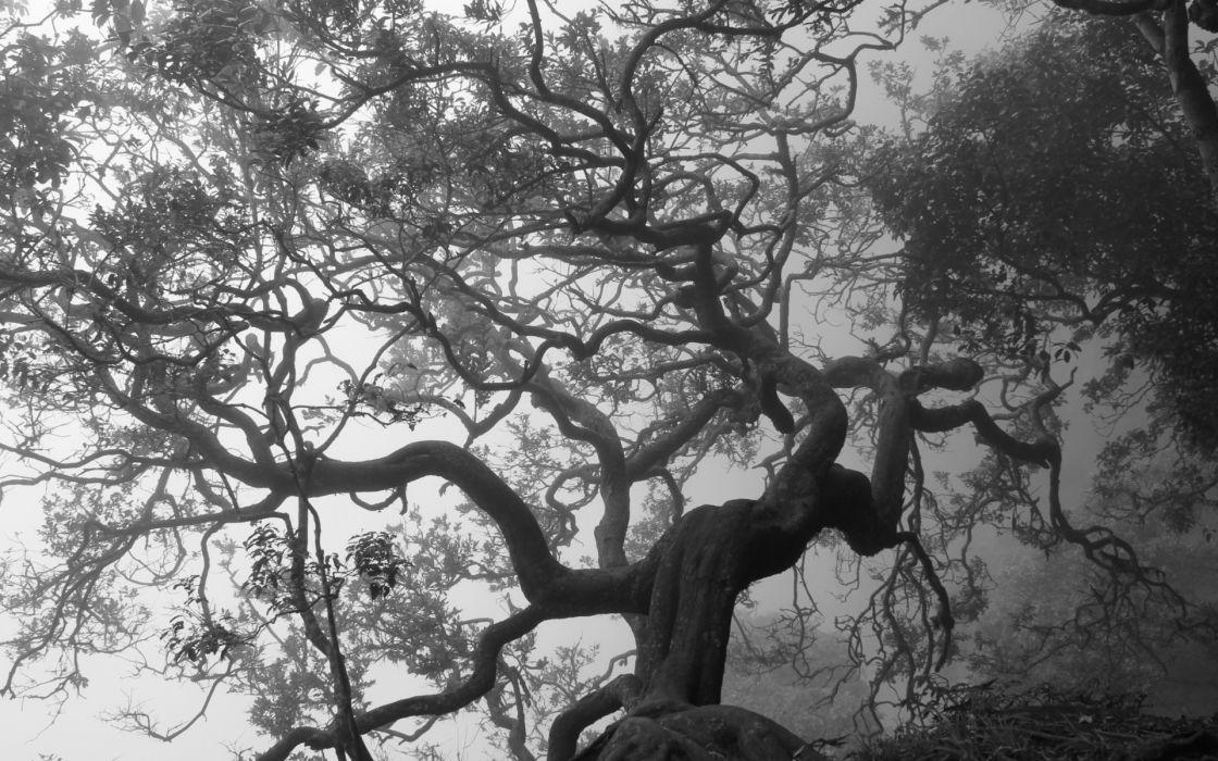 black white bw trees fog mist leaves wallpaper