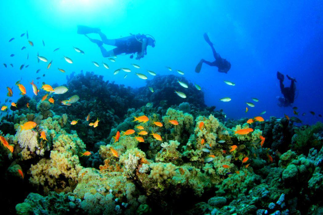 sports scuba diving wallpaper