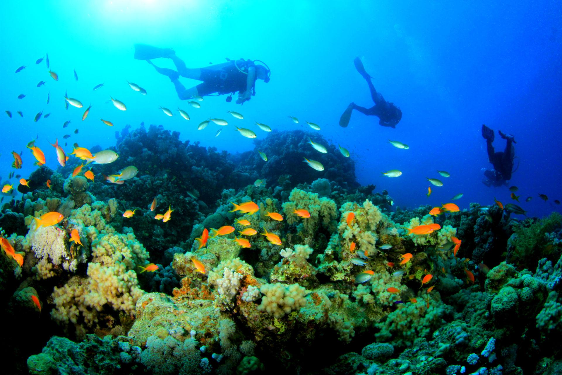 scuba diving wallpaper wallpapers - photo #16