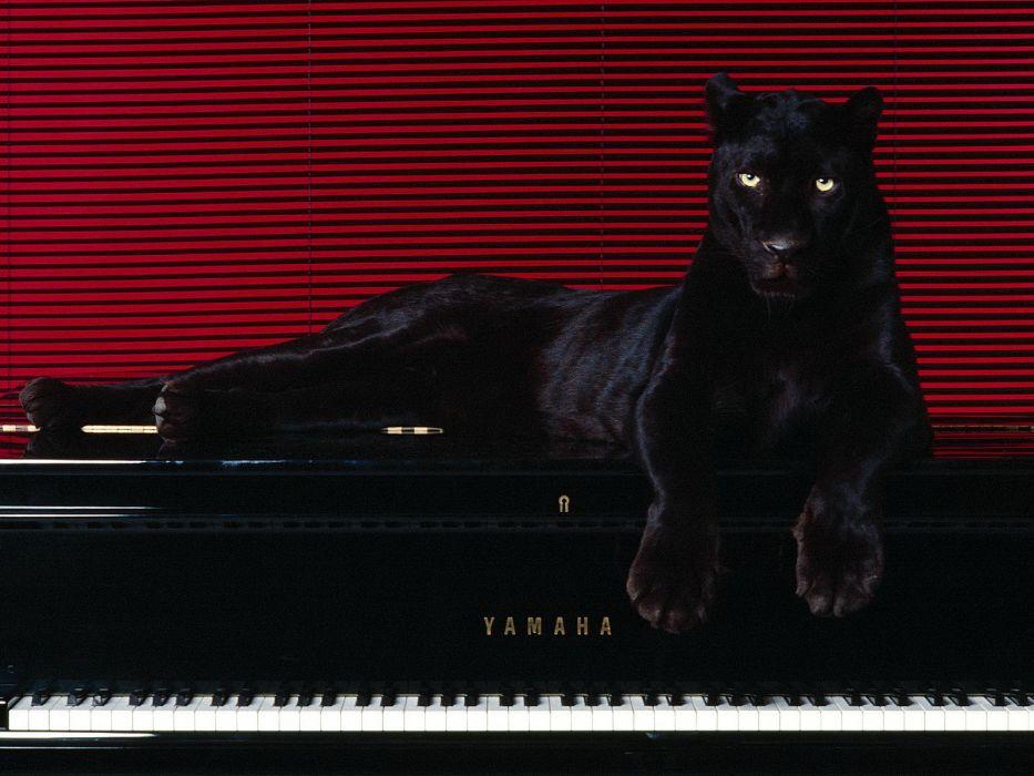 cats jaguar piano wallpaper