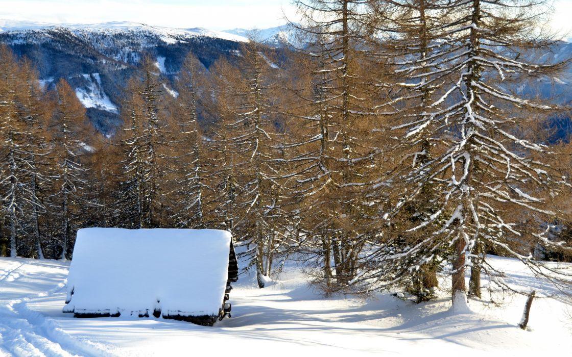 winter trees mountains wallpaper