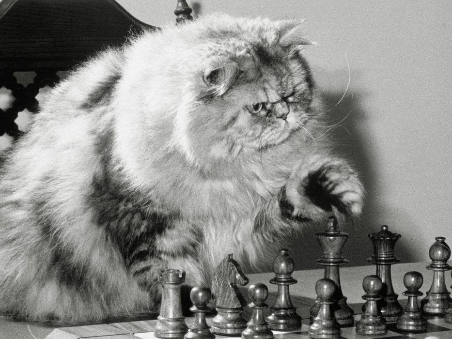 chess humor wallpaper
