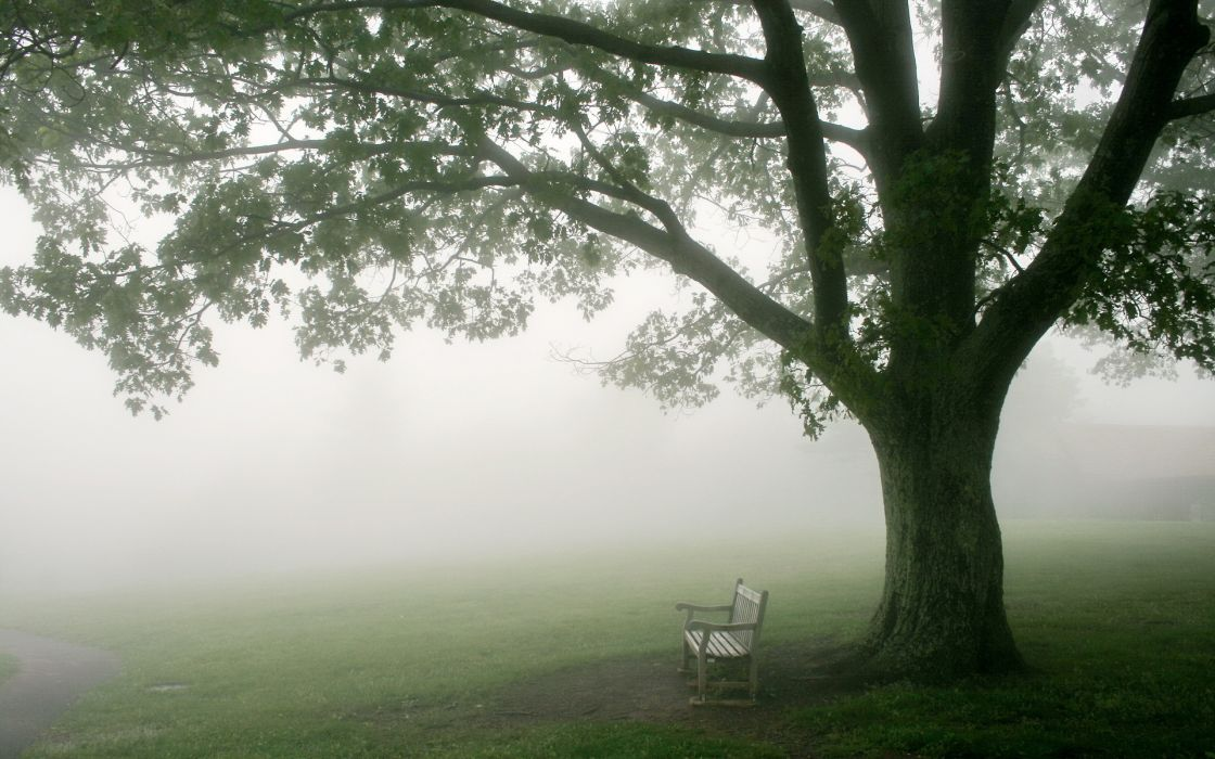 bench fog mood wallpaper