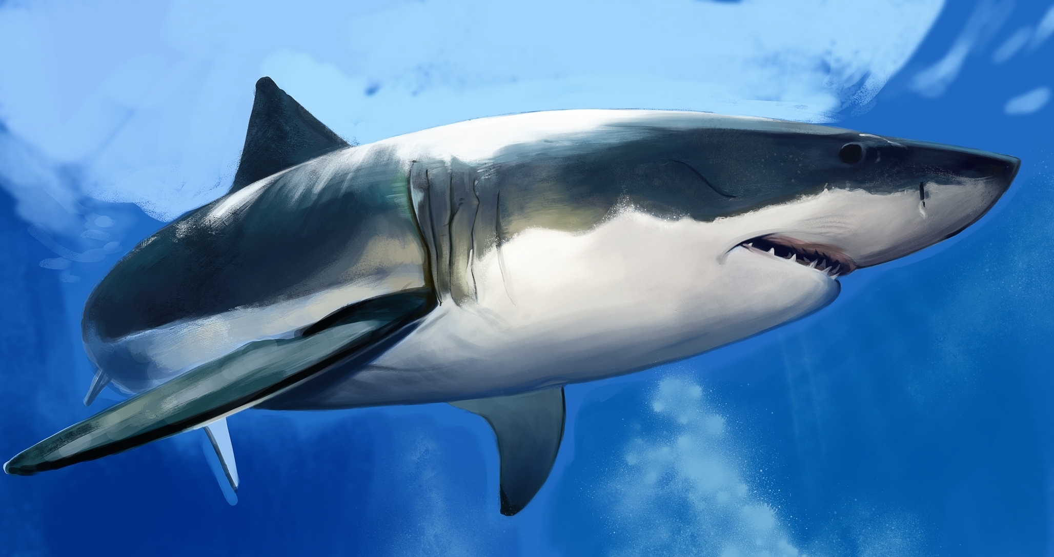 download wallpaper shark 1600 - photo #42