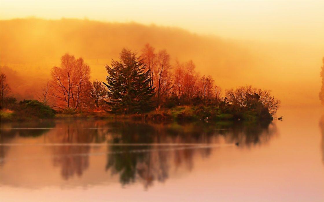 sunrise trees wallpaper