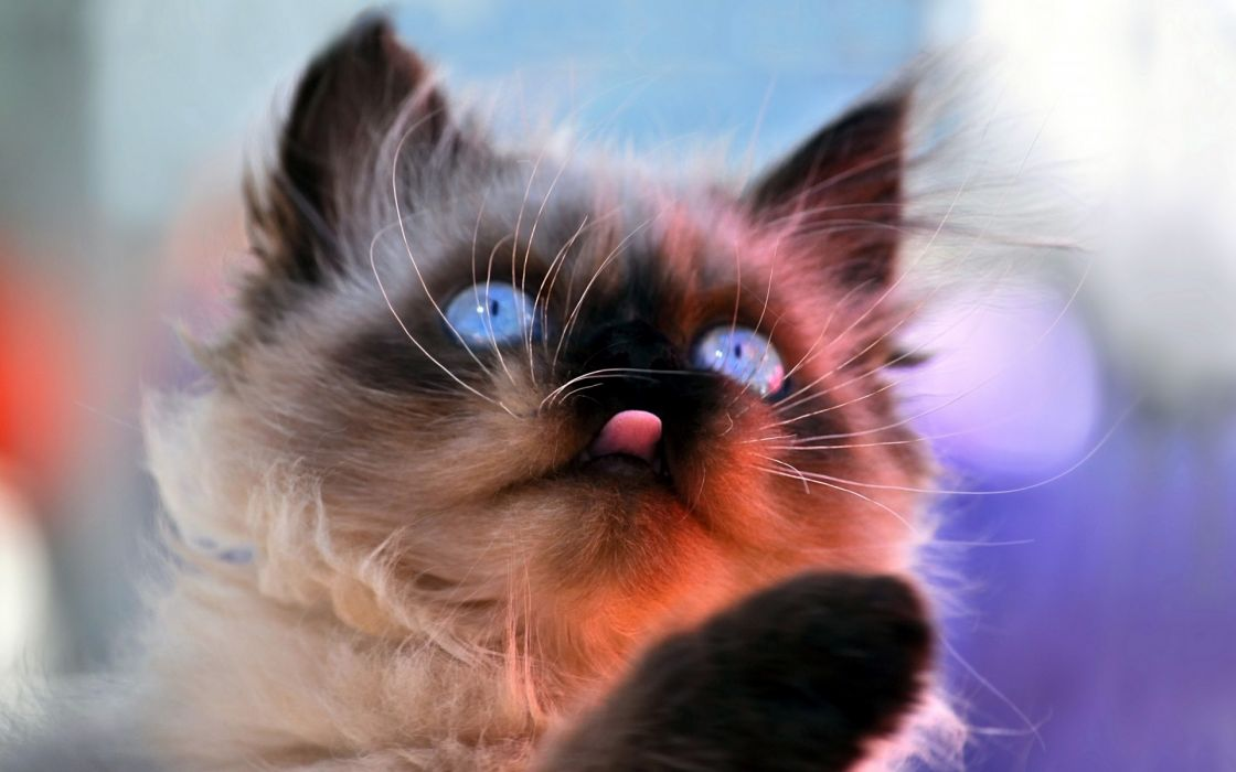 kittens cats felines babies face eyes humor cute funny whiskers wallpaper