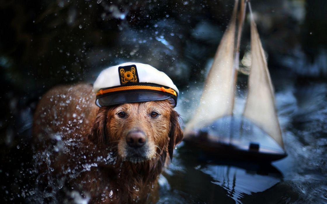 Captain cute humor drops face eyes pov sailing boats sailboat water reflection lakes toys wallpaper