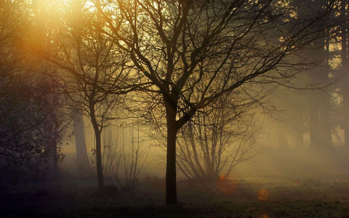 1 landscapes trees forest woods sunlight filtered fog mist wallpaper