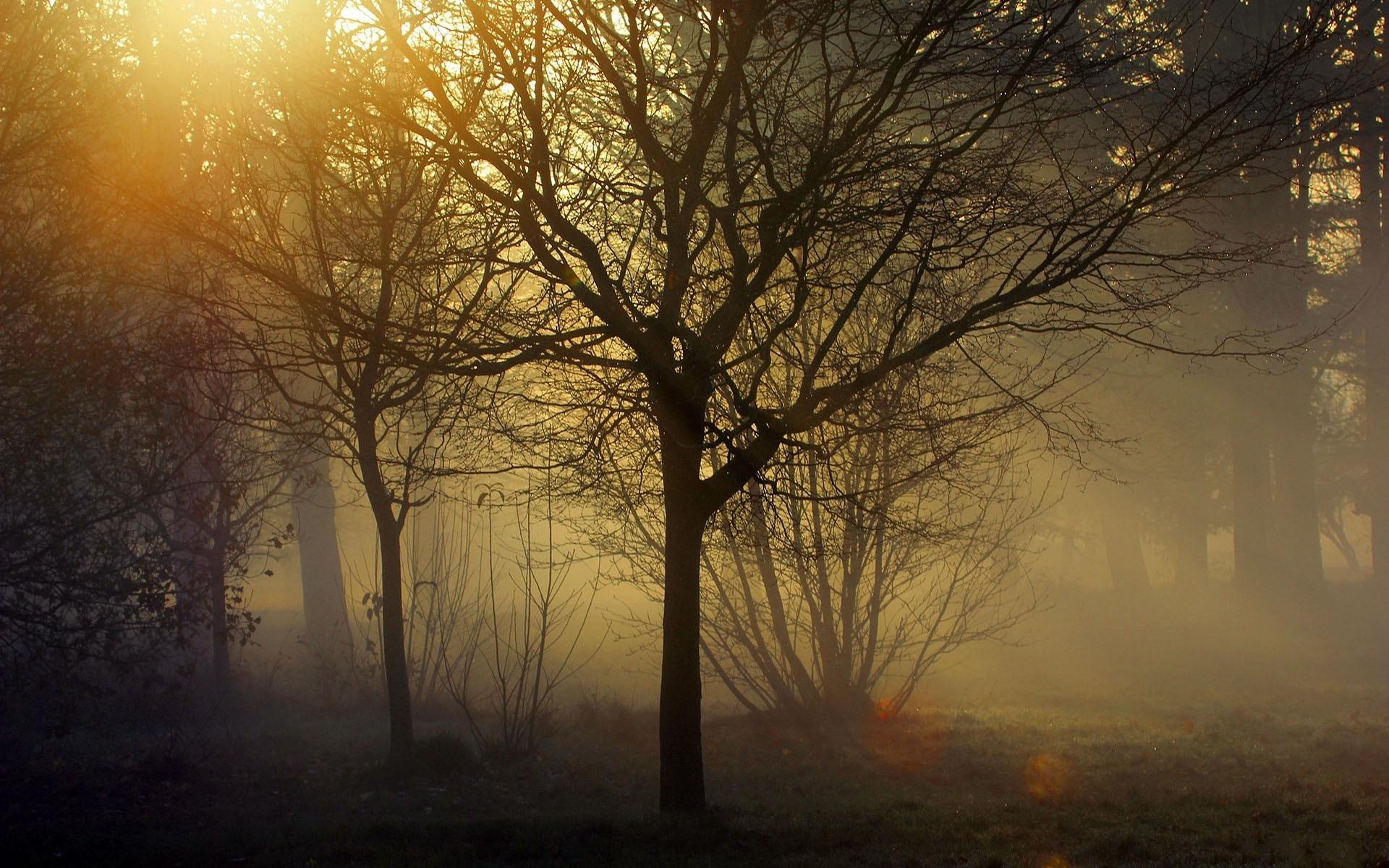 landscapes trees fog - photo #42