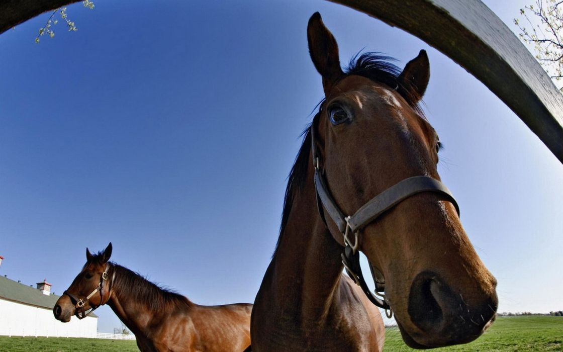 1 horses eyes face pov fence fisheye wallpaper