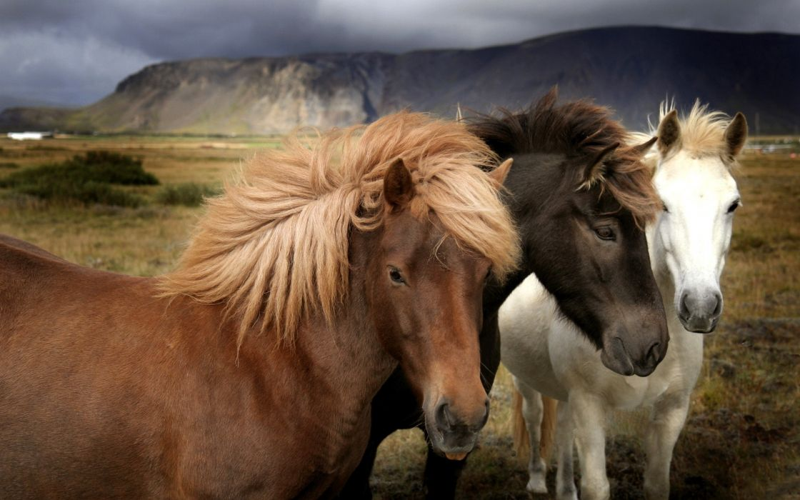 1 horses landscapes mountains wallpaper