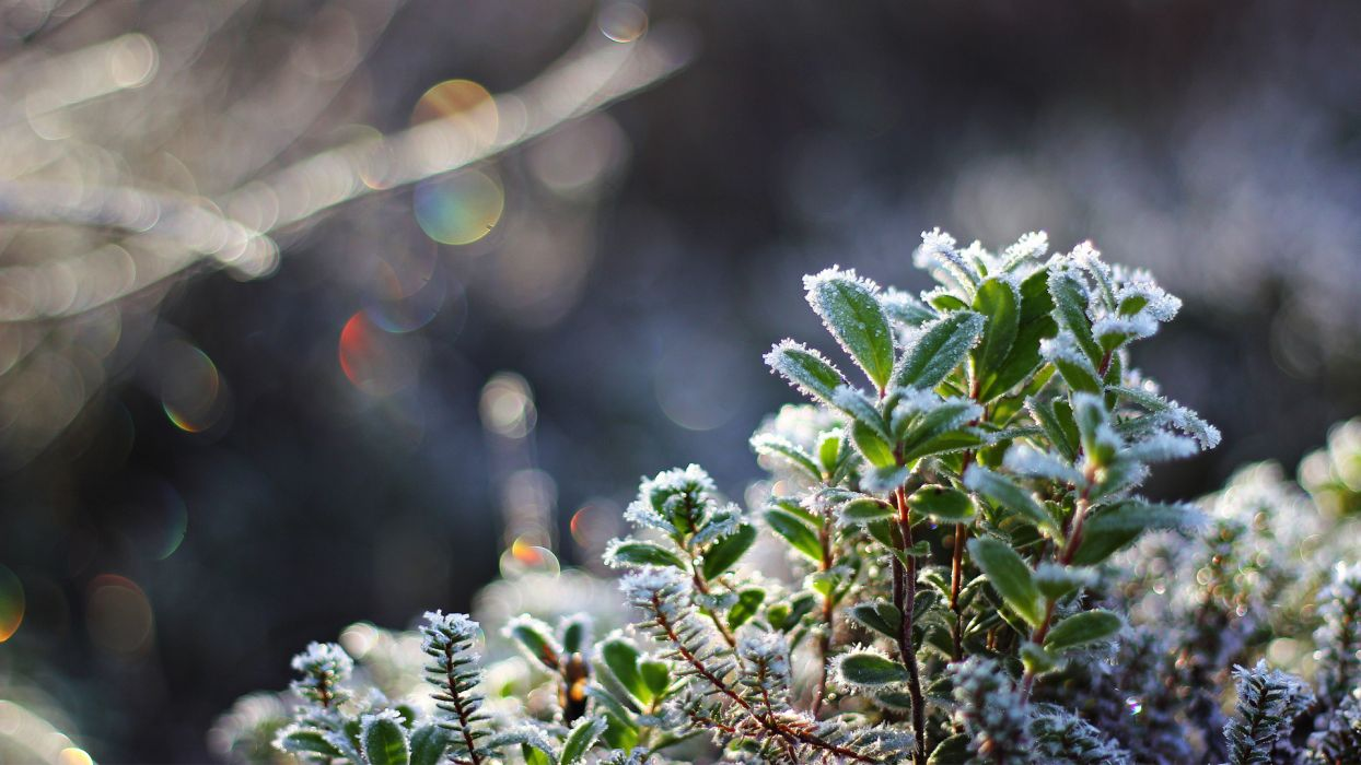 1 frost plants cold winter autumn fall wallpaper