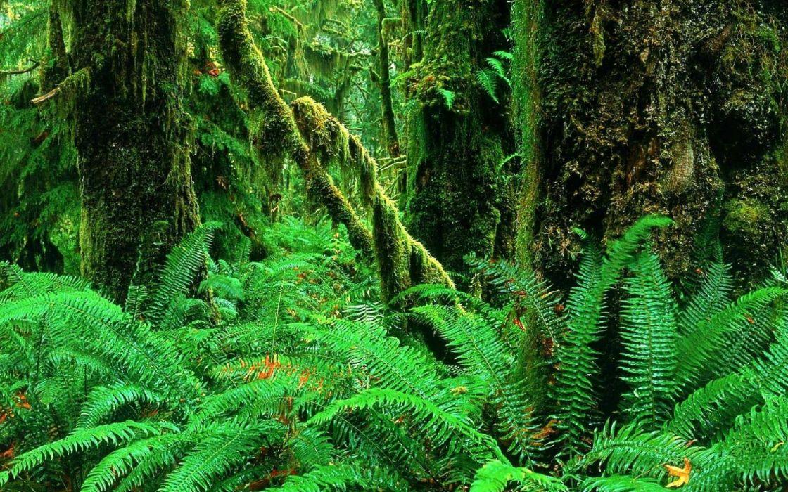 1 landscapes jungle forest woods ferns moss plants green wallpaper