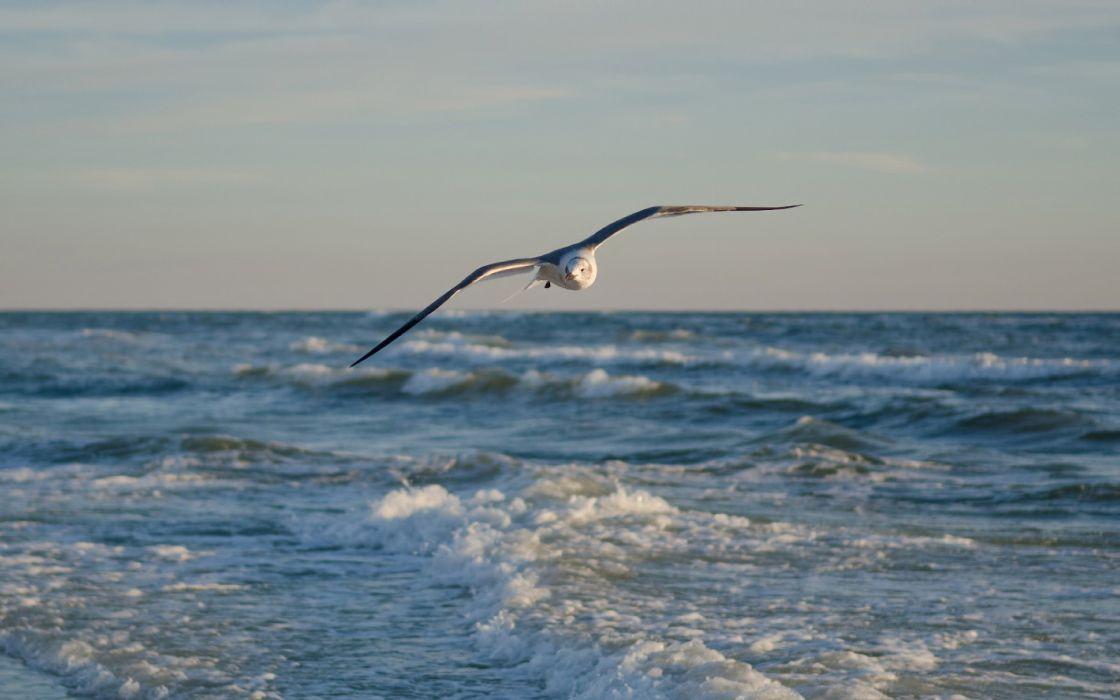 gulls ocean sea flight fly waves sky wallpaper