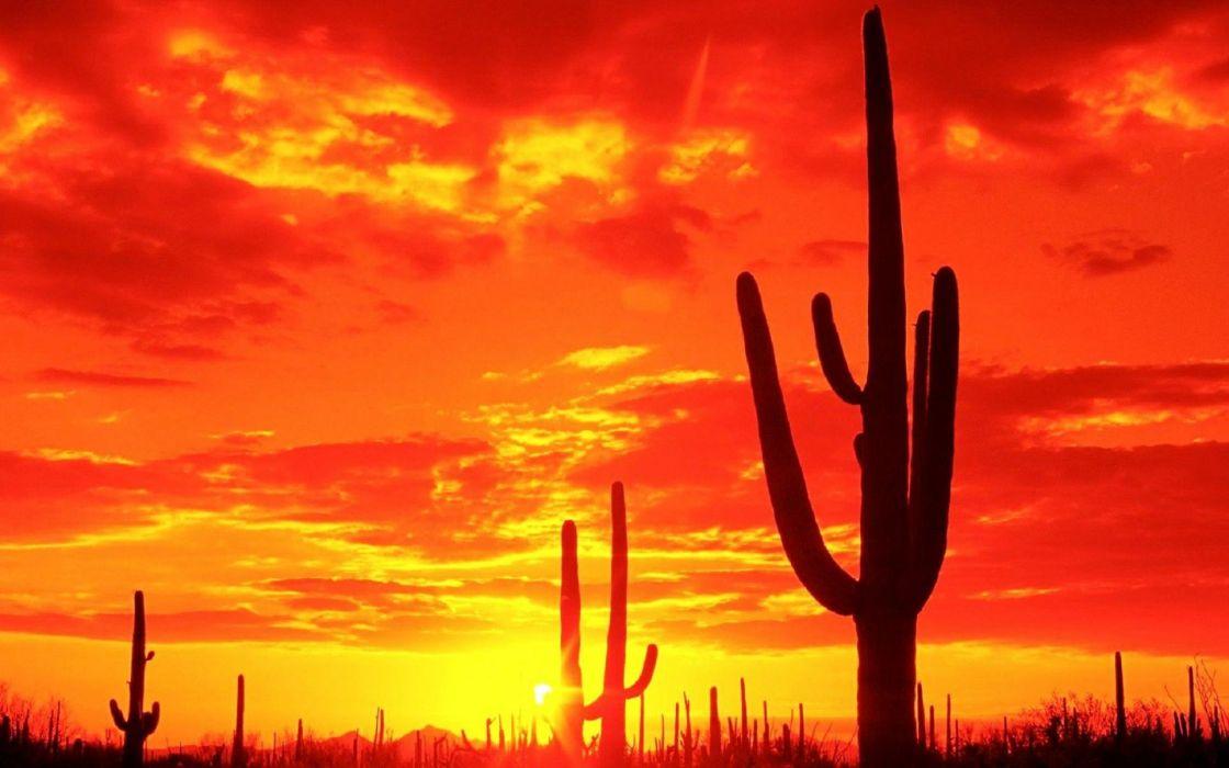 landscapes sunset sunrise sky clouds sun cactus wallpaper