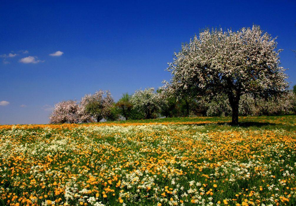 flowers meadow fields trees summer sky blossoms wallpaper