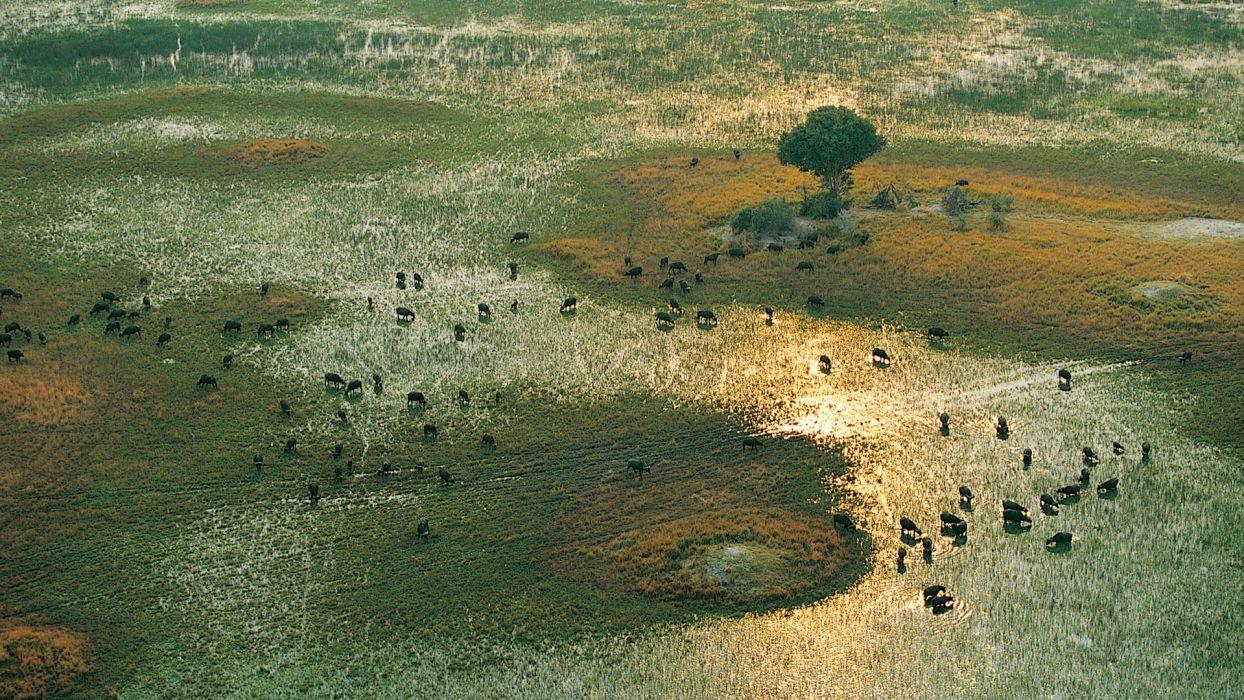 buffalo africa migration lakes landscapes nature wallpaper