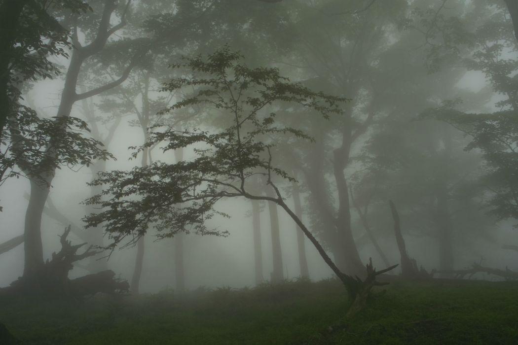 landscapes fog forest woods wallpaper