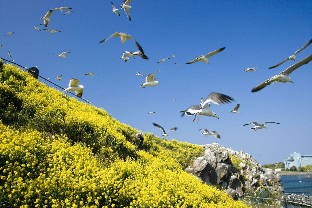 nature landscapes sky fly wallpaper