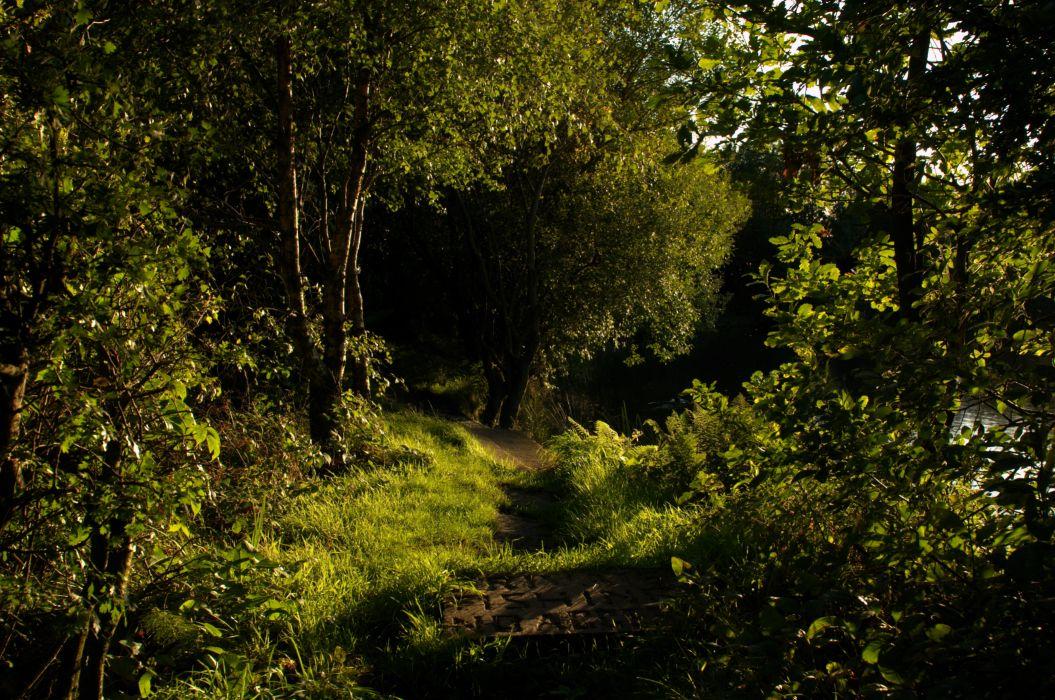 woods forest landscapes wallpaper