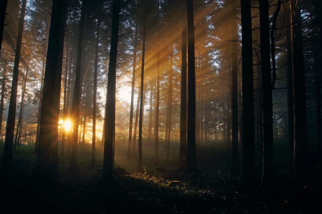 landscapes filtered sunlight beams rays sunset sunrise forest woods