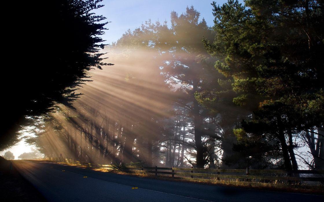 landscapes trees sunlight filtered beams rays wallpaper