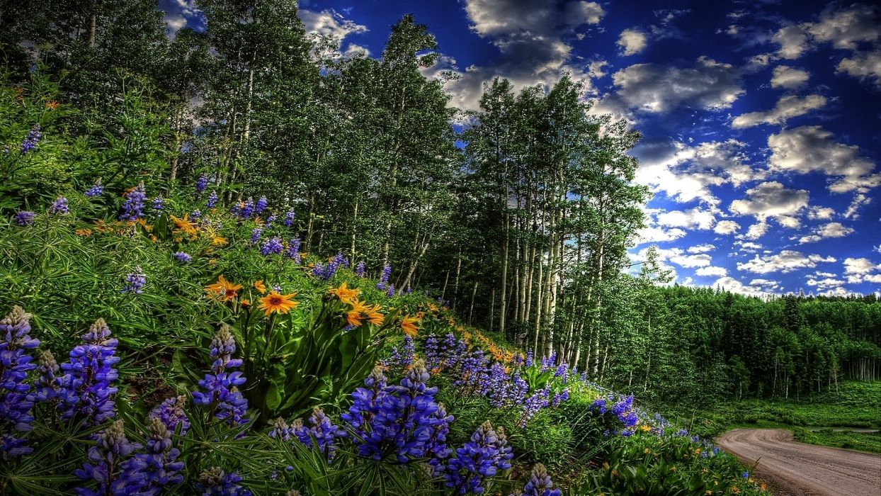 flowers trees hdr sky clouds wallpaper