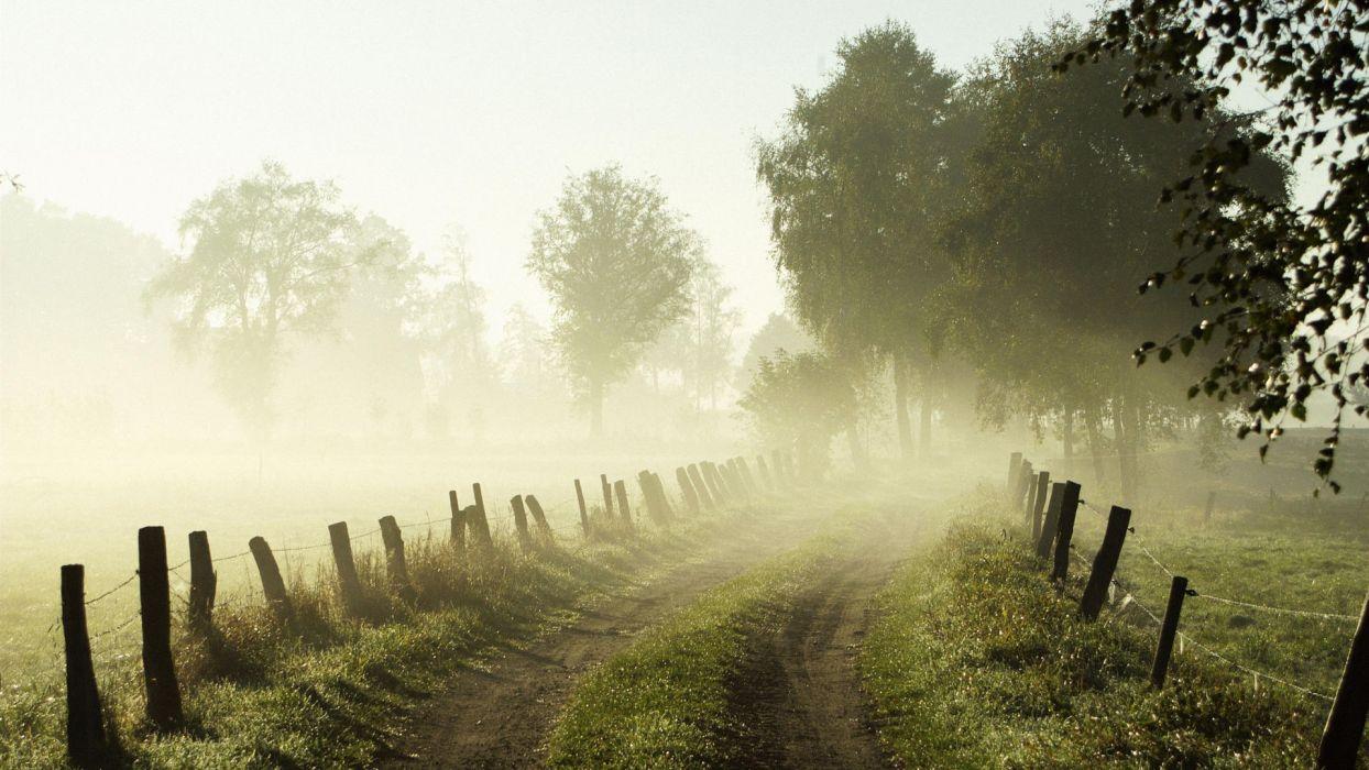 nature landscapes fog trees morning wallpaper