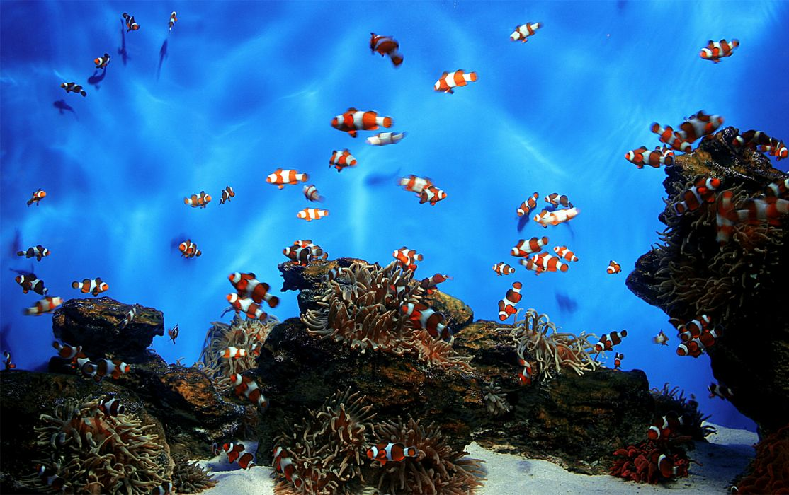 reef underwater wallpaper
