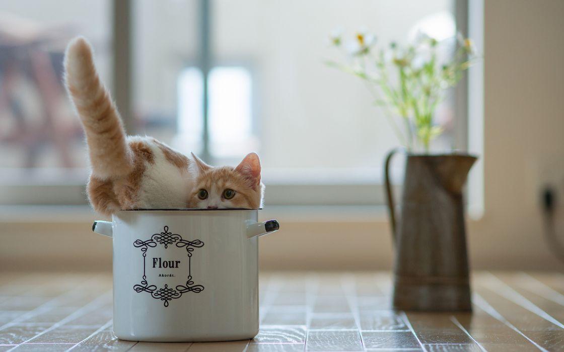 cats kittens cute humor funny wallpaper