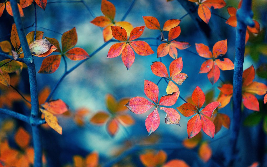 autumn fall trees wallpaper
