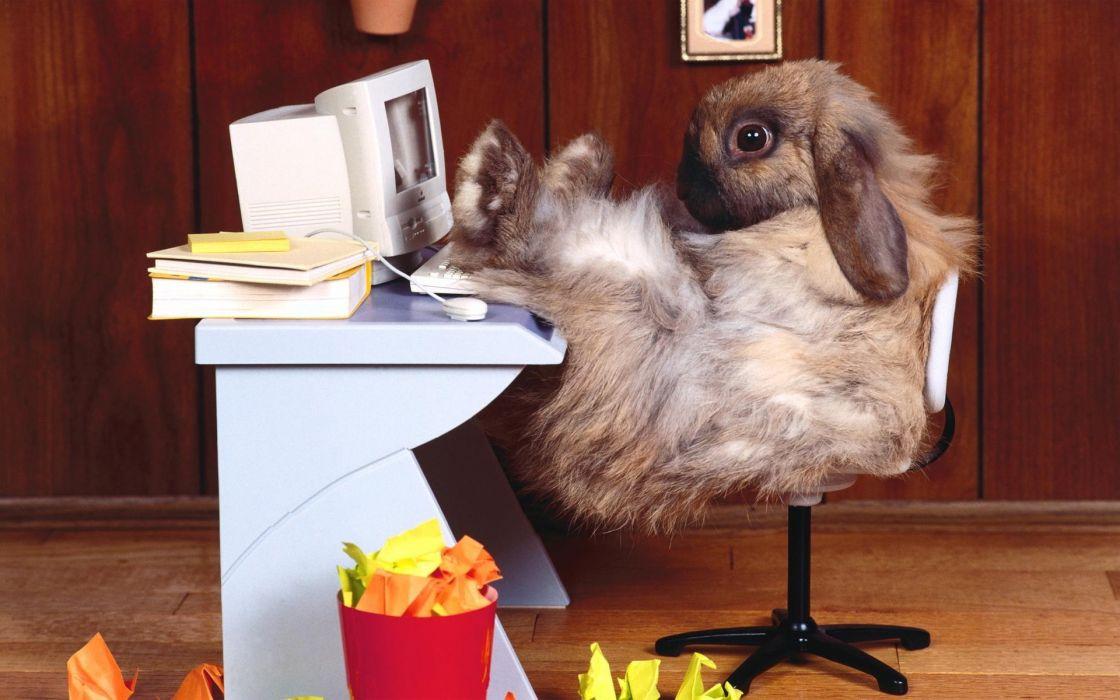 animals rabbits tech computer funny office wallpaper