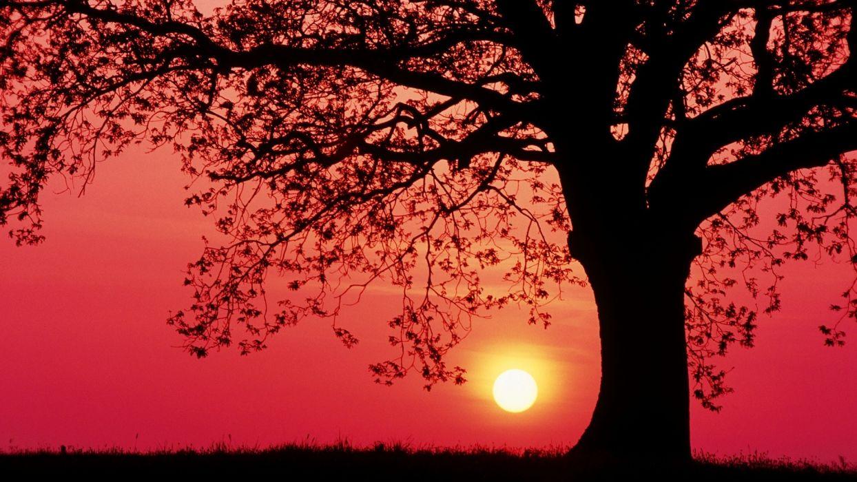 sunset sunrise sky trees landscapes leaves wallpaper