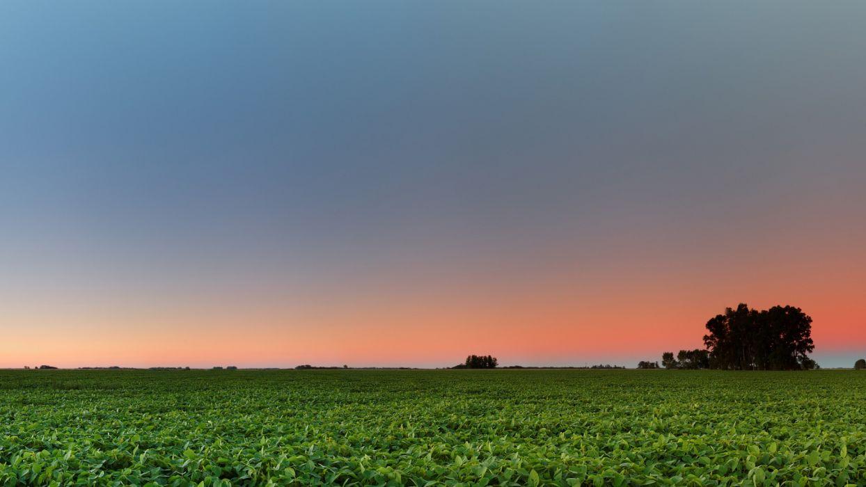 nature landscapes farm fields crops plants suset sunrise sky wallpaper