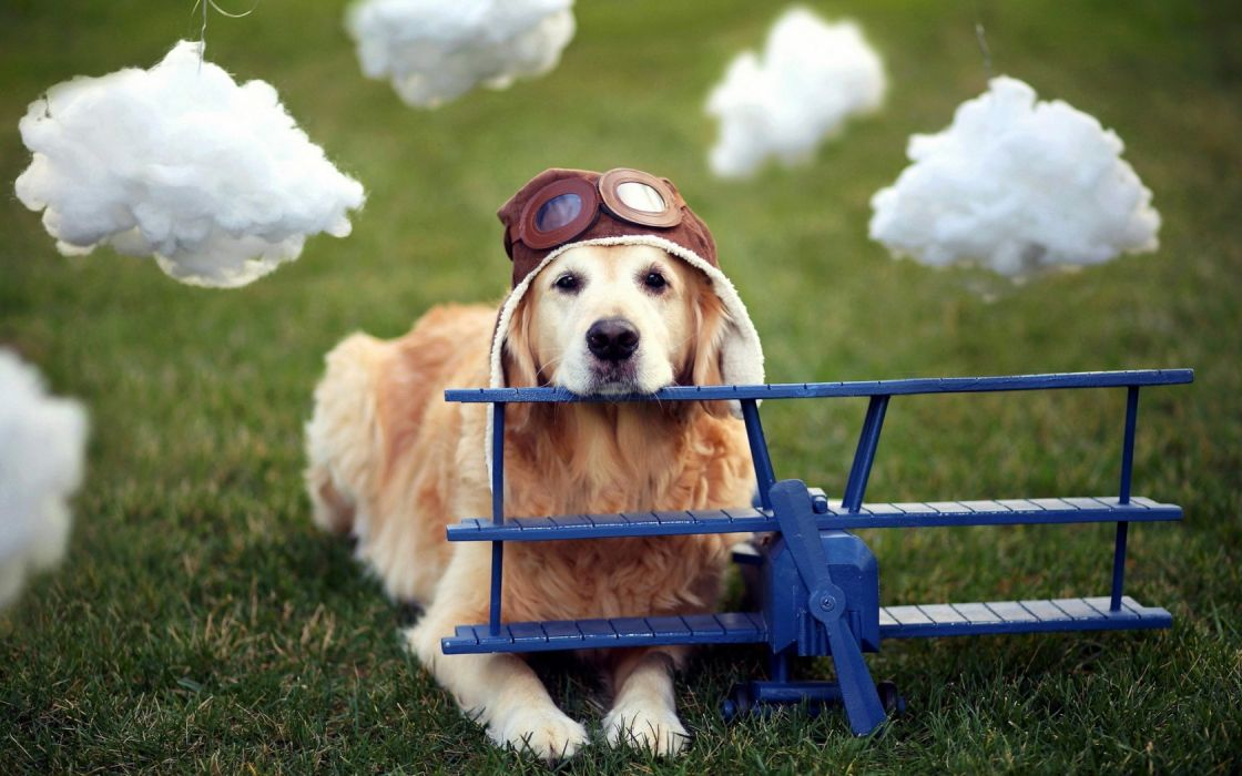 dogs cute costume uniform toys aircraft airplane glasses wallpaper
