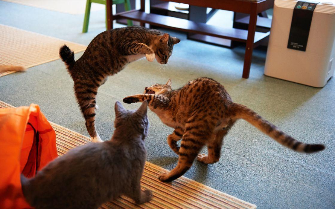 cats felines play wallpaper