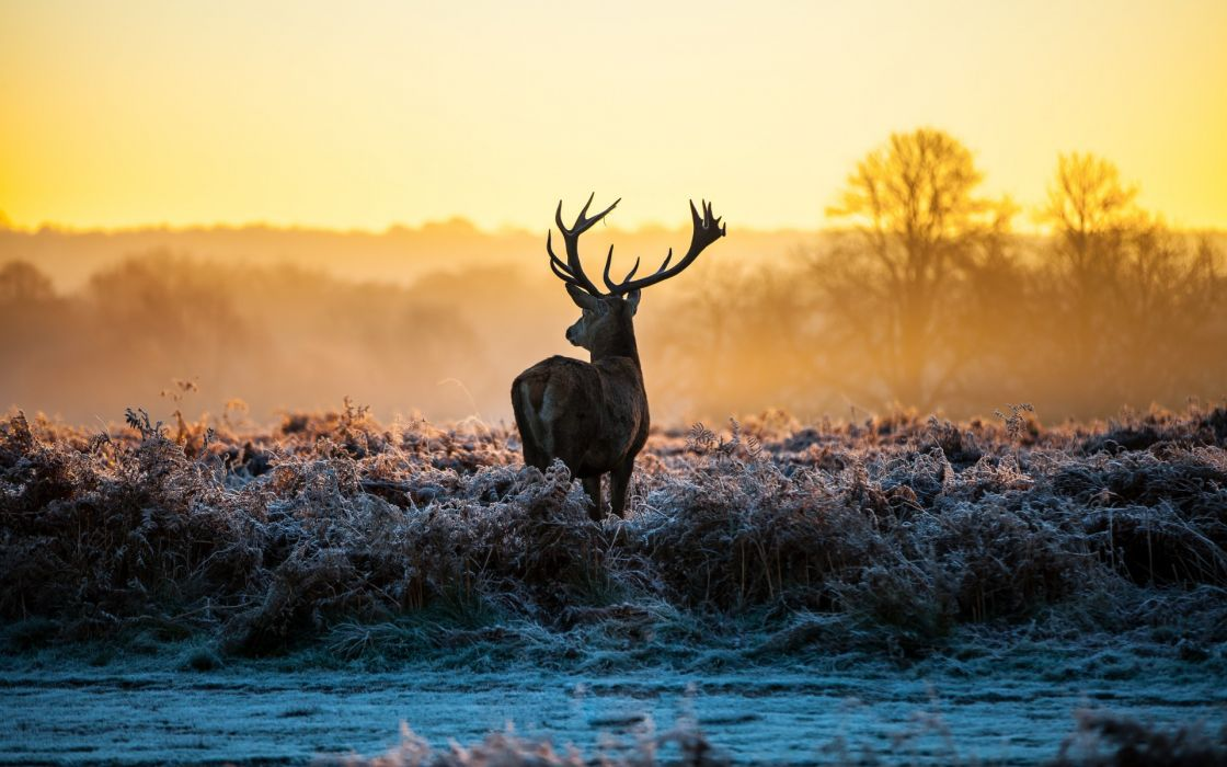 animals deer sunrise sunset landscapes nature autumn fall frost wallpaper