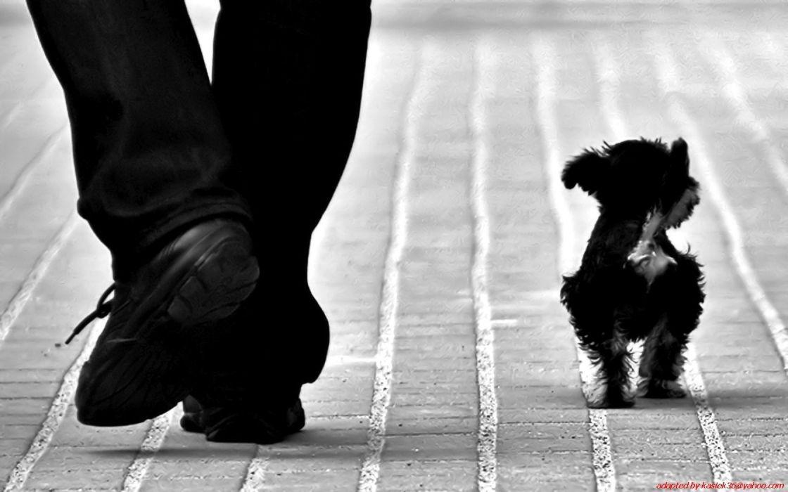 animals dogs monochrome black white cute wallpaper
