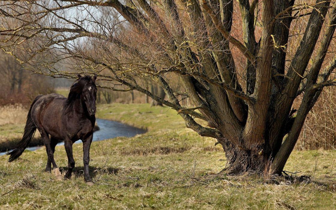 animals horses landscapes wallpaper