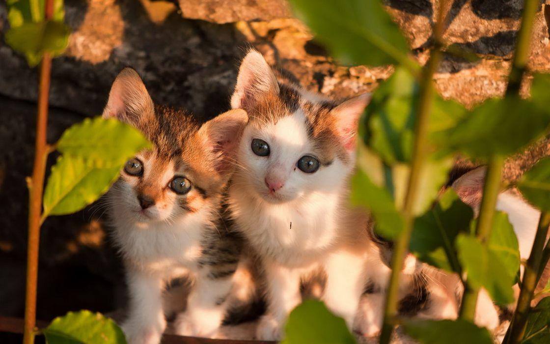 felines kittens cuteface eyes pov babies wallpaper