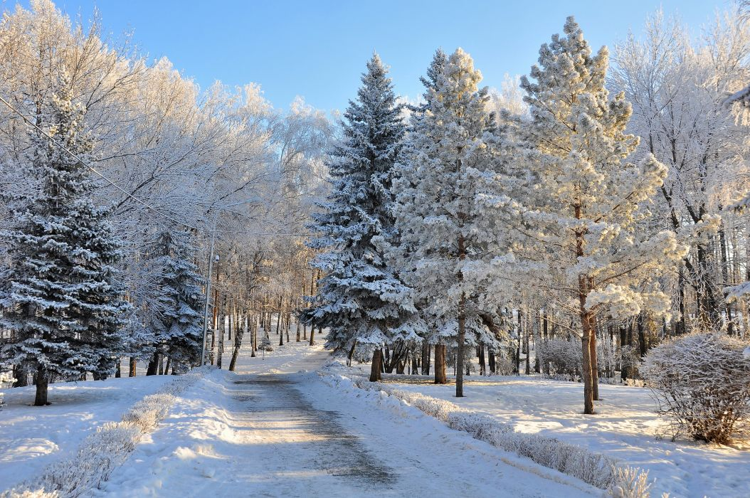 Seasons Winter Roads Snow Trees Fir forest roads wallpaper
