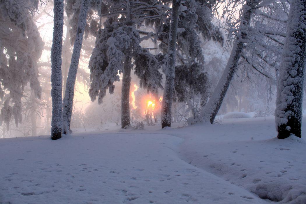 Seasons Winter Snow Trees forest woods sunrise sunset wallpaper